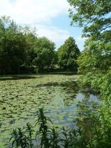 Ringwood Lake
